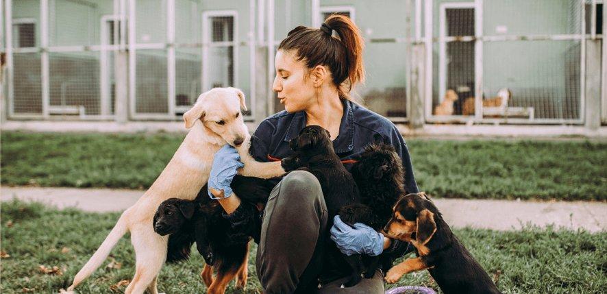 Hospedaria para Cães