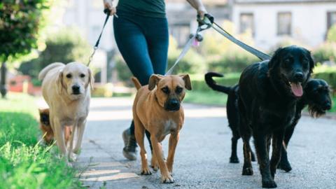 Passeador de Cães – Dog Walkers