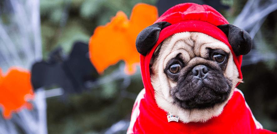 Roupas para Cães e Gatos: Fábrica e Comércio